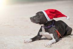 在圣诞老人帽子的狗在海滩 免版税库存图片
