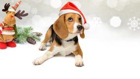在圣诞老人帽子的狗有新年和圣诞节装饰背景 图库摄影