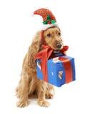 在圣诞老人帽子的狗给礼物 免版税库存照片