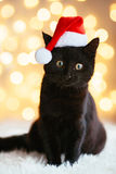 在圣诞老人帽子的猫 免版税库存照片