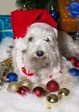 在圣诞老人帽子的白色狗有礼物盒的在圣诞树下 库存图片