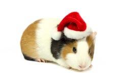 在圣诞老人帽子的试验品  库存照片