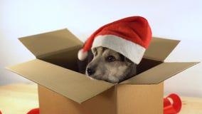 在圣诞老人帽子的逗人喜爱的小狗在有红色丝带的一个纸板箱坐 免版税库存照片