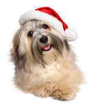 在圣诞老人帽子的逗人喜爱的愉快的圣诞节Havanese狗 库存图片