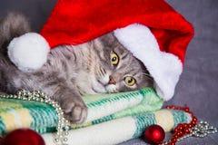 在圣诞老人帽子的逗人喜爱的毛茸的家庭猫有圣诞节球和小珠的 免版税库存照片