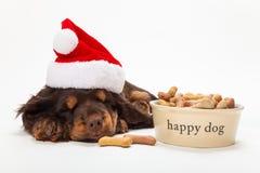 在圣诞老人帽子的逗人喜爱的西班牙猎狗小狗睡觉由碗的饼干 库存图片