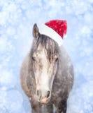 在圣诞老人帽子的马在与bokeh和雪的蓝色背景 免版税库存图片