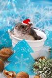 在圣诞老人帽子等待的圣诞节的仓鼠 免版税图库摄影