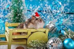在圣诞老人帽子等待的圣诞节的仓鼠 库存照片