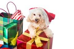 在圣诞老人服装的微笑的长卷毛狗小狗有丰富的圣诞节美国兵的 免版税库存图片