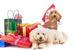 在圣诞老人服装的逗人喜爱的长卷毛狗小狗有丰富的圣诞节gif的 图库摄影