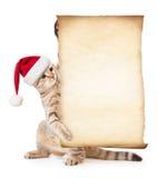 在圣诞老人的帽子的猫有老纸或羊皮纸的 免版税图库摄影