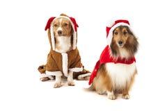 在圣诞老人礼服的两条狗 图库摄影