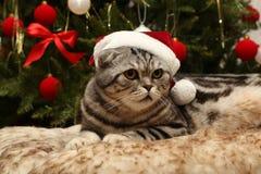 在圣诞老人衣服的猫  免版税库存图片