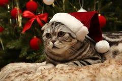 在圣诞老人衣服的猫  库存图片