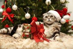 在圣诞老人衣服的猫  免版税库存照片
