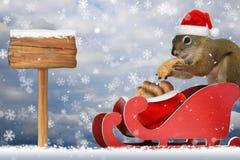 在圣诞老人` s雪橇的灰鼠 免版税库存图片