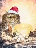 在圣诞节圣诞老人帽子的不可思议的猫有蜡烛、装饰和雪花的 免版税库存照片