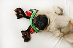 在圣诞节垫铁的逗人喜爱的哈巴狗 免版税库存图片