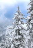在圣诞节定期的树的斯诺伊风景与雪在阿尔卑斯 免版税图库摄影