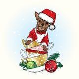 在圣诞节帽子的一条美丽的狗在杯子坐 也corel凹道例证向量 新年` s和圣诞节 Chihuahas 图库摄影