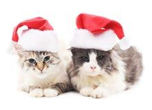 在圣诞节帽子的两只猫 库存图片
