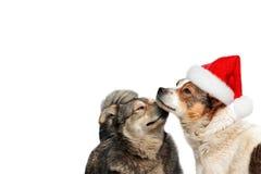 在圣诞节帽子的两条狗 库存图片