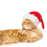 在圣诞节帽子的大姜猫 免版税库存图片