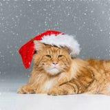 在圣诞节帽子的大姜猫 图库摄影