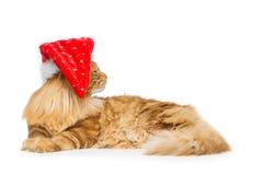 在圣诞节帽子的大姜猫 库存图片