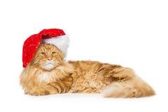 在圣诞节帽子的大姜猫 库存照片
