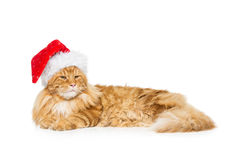 在圣诞节帽子的大姜猫 免版税库存照片
