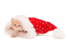 在圣诞节帽子的小的红色小猫 免版税图库摄影