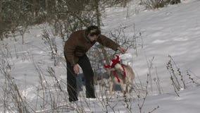 在圣诞节帽子的山羊在白色 影视素材
