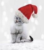 在圣诞节帽子的幼小猫 图库摄影