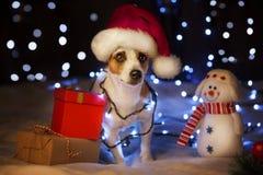 在圣诞节帽子的狗 库存照片