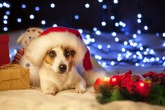 在圣诞节帽子的狗 免版税图库摄影
