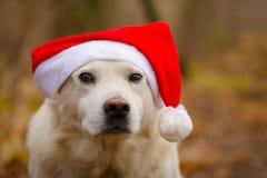 在圣诞节帽子的狗 免版税库存图片
