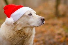 在圣诞节帽子的狗 免版税库存照片
