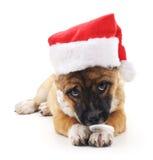 在圣诞节帽子的狗 图库摄影