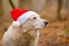 在圣诞节帽子的白色狗 免版税图库摄影