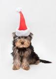 在圣诞节帽子的约克夏狗 免版税库存图片