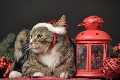 在圣诞节帽子的虎斑猫 免版税图库摄影