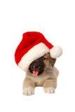 在圣诞节帽子的逗人喜爱的小狗-假日题材 免版税库存照片