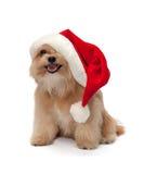 在圣诞节帽子的逗人喜爱的狗 图库摄影