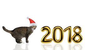 在圣诞节帽子的逗人喜爱的猫在2018年附近 查出在白色 免版税库存照片