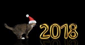 在圣诞节帽子的逗人喜爱的猫在2018年附近 查出在黑色 免版税图库摄影
