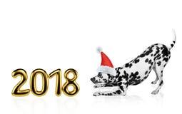 在圣诞节帽子的逗人喜爱的达尔马希亚狗在2018年附近 查出在白色 库存图片
