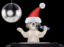 在圣诞节帽子的Shitzu狗唱与话筒卡拉OK演唱歌曲的 查出在黑色 免版税库存照片