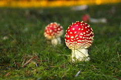 在圣诞节心情的森林蘑菇 免版税库存照片